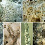 Turizmin Vazgeçilmezi Arkeolojik Eserlerde Fungal Korozyon: Phaselis Örneği