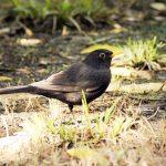 Phaselis Antik Kenti ve Beydağları (Olympos) Sahil Milli Parkının Kuşları