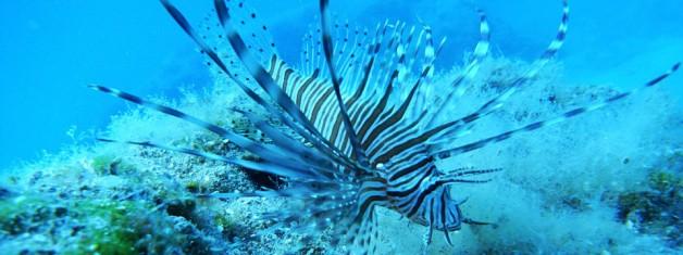 Phaselis'in Yeni Konukları ve Phaselislilerin Tüketmediği Balıklar