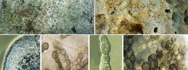 Turizmin Vazgeçilmezi Arkeolojik Eserlerde Fungal Korozyon