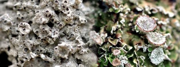Phaselis Antik Kenti (Antalya) Likenleri – I